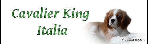 CavalierKingItalia