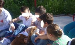 cavalier king pet therapy