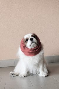 snood cavalier