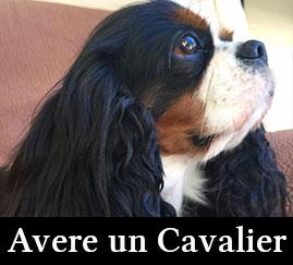 Avere un Cavalier