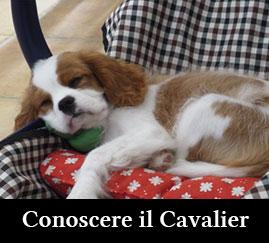 Conoscere il Cavalier